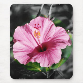 Pink Hibiscus Photo Mouse Pad