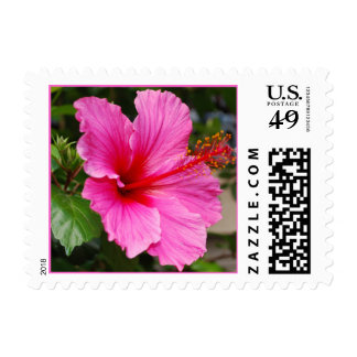 Pink Hibiscus Postage