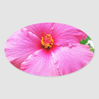 Pink Hibiscus Rain Sprinkles, Oval Sticker