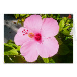 Pink Hibiscus Tropical Flower Card