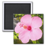 Pink Hibiscus Tropical Flower Magnet