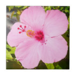 Pink Hibiscus Tropical Flower Small Square Tile
