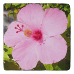 Pink Hibiscus Tropical Flower Trivet