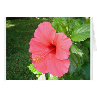 Pink Hisbiscus Flower Card