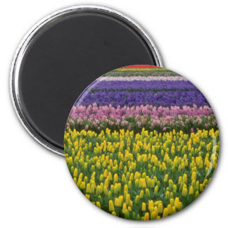 Pink Holland in springtime flowers Magnets