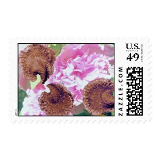Pink Hollyhock seeds (Althaea rosea) flowers Stamp