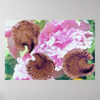 Pink Hollyhock seeds (Althaea rosea) flowers Posters