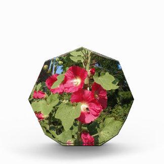 Pink Hollyhocks Acrylic Award