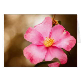 Pink Home Run Rose with Yellow Greeting Card