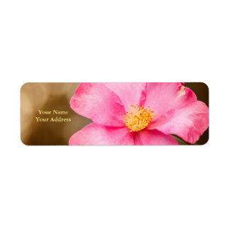 Pink Home Run Rose with Yellow Return Address Label