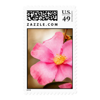Pink Home Run Rose with Yellow Stamp
