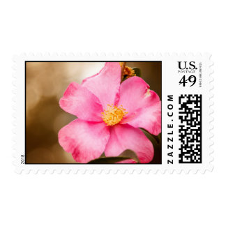 Pink Home Run Rose with Yellow Stamps