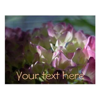 Pink Hortensia Postcard