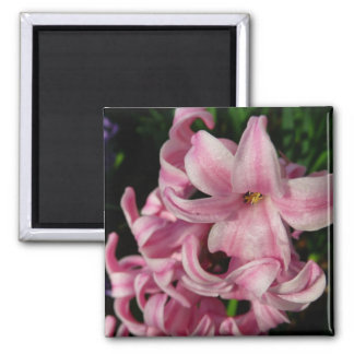 Pink Hyacinth Beautiful Spring Flower 2 Inch Square Magnet