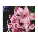 Pink Hyacinth Beautiful Spring Flower Canvas Print