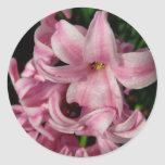 Pink Hyacinth Beautiful Spring Flower Classic Round Sticker