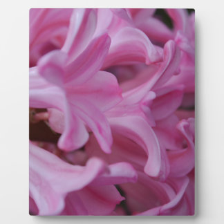 Pink Hyacinth Plaque