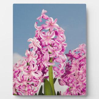 Pink Hyacinth Display Plaque