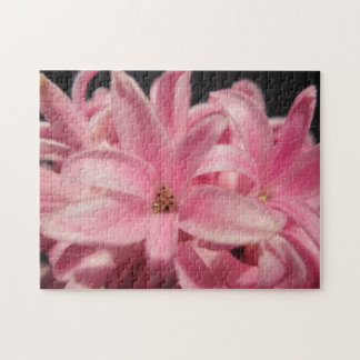Pink hyacinth puzzles