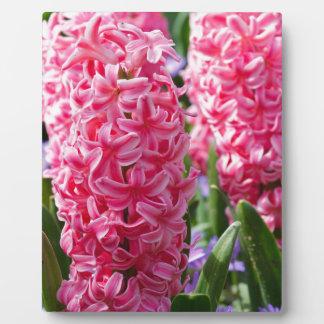 Pink Hyacinths Display Plaque