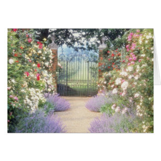Pink Hybrid Rose-Lined Path To Gate, Underplanted Card