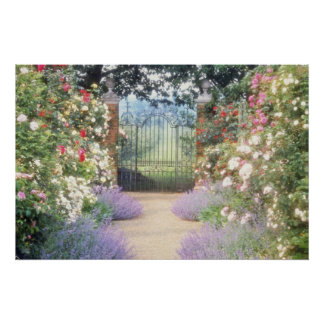 Pink Hybrid Rose-Lined Path To Gate, Underplanted Poster