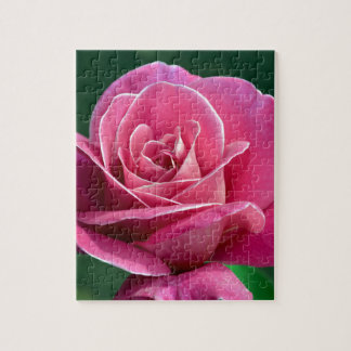 Pink Hybrid Tea Rose Jigsaw Puzzles