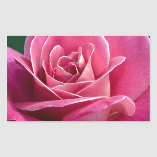 Pink Hybrid Tea Rose Stickers