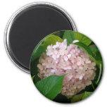 Pink hydrangea 2 inch round magnet