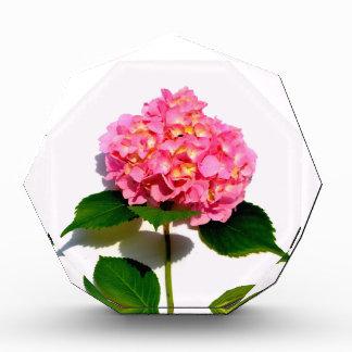 Pink Hydrangea Award