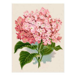 Pink Hydrangea Botanical Print Postcards