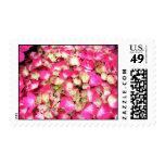Pink Hydrangea Bouquet Postage