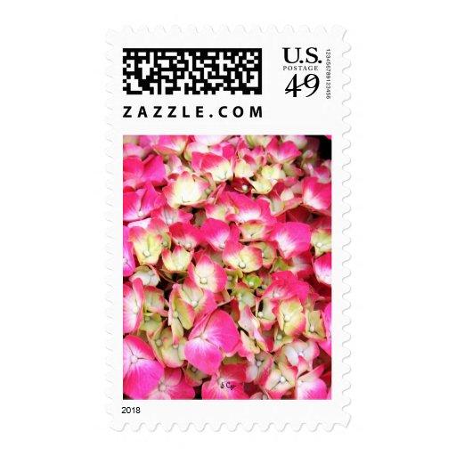 Pink Hydrangea Bouquet Postage Stamps