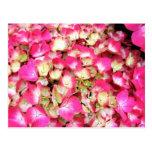 Pink Hydrangea Bouquet Postcard