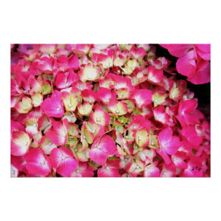 Pink Hydrangea Bouquet Poster, S Cyr Poster