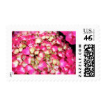Pink Hydrangea Bouquet Stamps