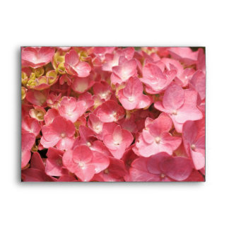Pink hydrangea envelope