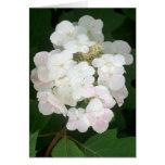 Pink hydrangea flower cluster greeting card