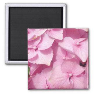 Pink Hydrangea flowers magnet