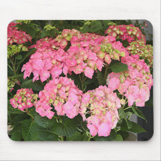 Pink hydrangea flowers mouse pad