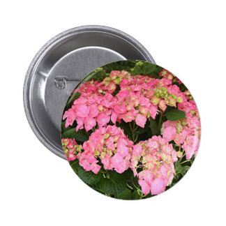 Pink hydrangea flowers pinback button