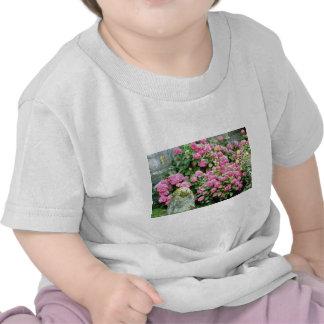 Pink Hydrangea Macrophylla Next To Milestone flowe Tee Shirt