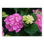 Pink Hydrangea Notecards Greeting Cards