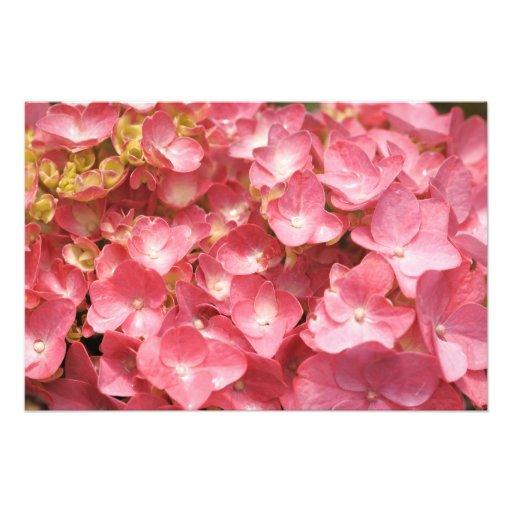 Pink hydrangea photo art