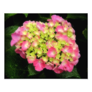 Pink Hydrangea Photography Photo Print