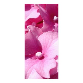 Pink Hydrangea rackcard Rack Card