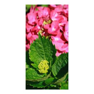 Pink hydrangea with bud card