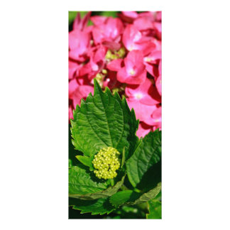 Pink hydrangea with bud rack card