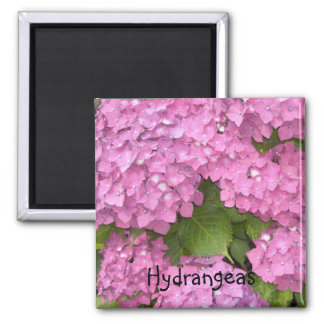 Pink  Hydrangeas 2 Inch Square Magnet