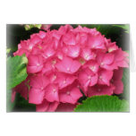 Pink Hydrangeas Card